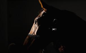 סוס מטופל במרפאת חיות באנגליה (צילום: Ian Forsyth/Getty Images)