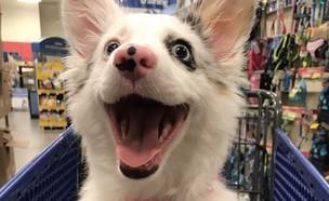 הכלבה שמשגעת את הרשת (צילום: צילום מסך מתוך אינסטגרם)