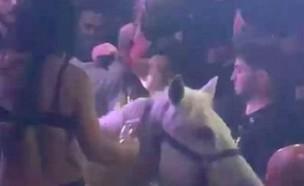 אישה עם סוס במועדון (צילום: Twitter)