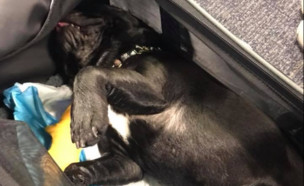 כלב מת (צילום: טוויטר\MaggieGremminger )
