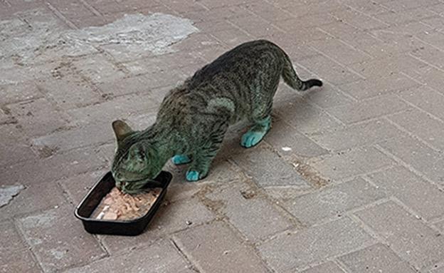 """""""הזדעזעתי ממש"""", החתול היום (צילום: קטיה קמינסקי)"""