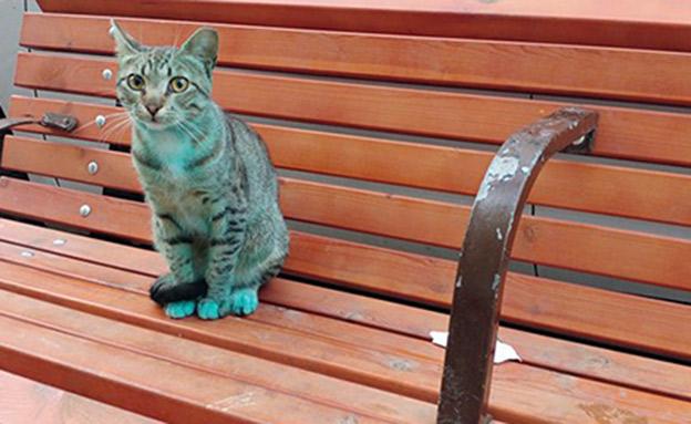 החתול שנמצא היום בפלורנטין (צילום: שרון שמש)