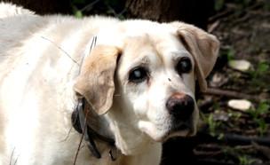 הכלב מג'יק (צילום: קובי ברוק)