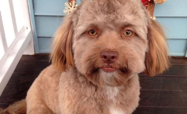 כלב בן אדם (צילום: twitter\@ellievhall)