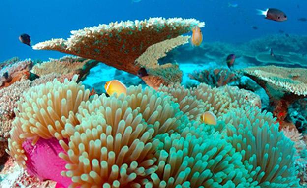 איי מרשל אלמוגים (צילום: Raycrew)