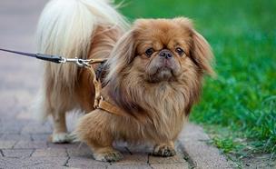 """גם כלבים קדושים. צפו ב""""מחדשים לכם"""" (צילום: 123RF)"""