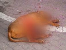 תיעוד מזעזע: שחט כלב מול עיני בעליו (צילום: מתוך חי בלילה, שידורי קשת)