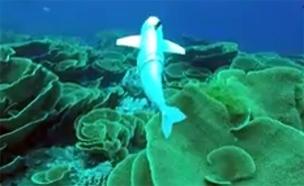 דג הרובוט בפעולה (צילום: CNN)