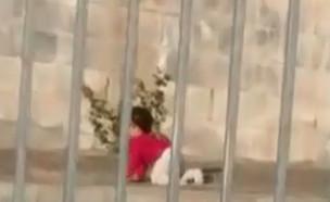 """תיעוד: תינוק זוחל על כביש בבית שמש (צילום: מתוך """"חדשות הבוקר"""" , קשת 12)"""