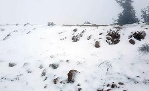 צפו בשלג בחרמון (צילום: אתר החרמון)