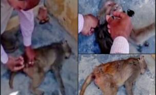 תעלומת הקופים המתים (צילום: יוטיוב\Go News 24x7 India)