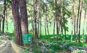 על כביש 70 (צילום: ויקיפדיה)