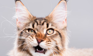 לחתול אין קשר לכתבה, אנחנו חושבים... (צילום: shutterstock)