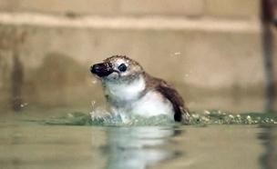 פעם ראשונה בים: כך לומדים לשחות (צילום: CBS)