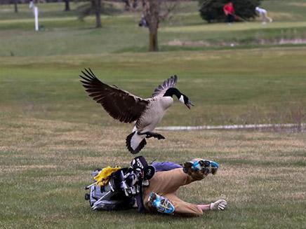 אווז אחרי אדם - רגעי התקיפה