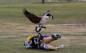אווז אחרי אדם - רגעי התקיפה (צילום: CNN)