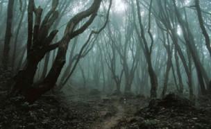 יער הויה באצ'ו, רומניה (צילום: אינסטגרם\discover_wonderful_places)