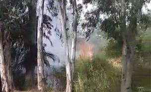 תיעוד השריפה