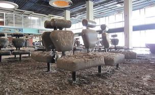 שדה תעופה נטוש (צילום: ויקיפדיה)