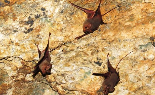 האטרקציה הכי שווה בטירת הכרמל (צילום: דב גרינבלט, החברה להגנת הטבע)