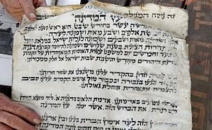 המגילה שהסתתרה בין השורשים (צילום: דוברות המועצה האזורית עמק הירדן)