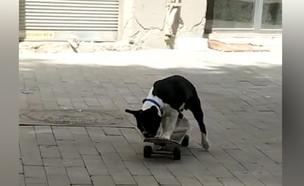 הכלב שכובש את ישראל בגלישה (צילום: תום וייס, פייסבוק)