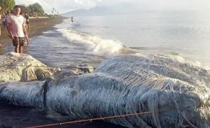 צפו: יצור מסתורי משגע את הפיליפינים