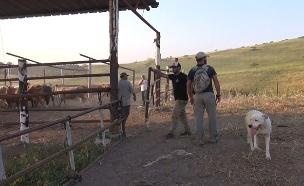 מאבק בפשיעה חקלאית (צילום: חדשות 2)