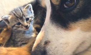 כלב אימץ ארבעה חתולים (צילום: AP)