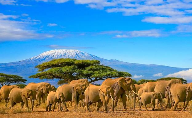 קניה (צילום: Paul Hampton, shutterstock)