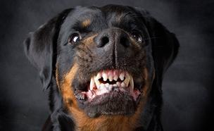 הותקף בידי כלב בזמן ריצה ויפוצה (אילוסטרציה) (צילום: RF123, חדשות)