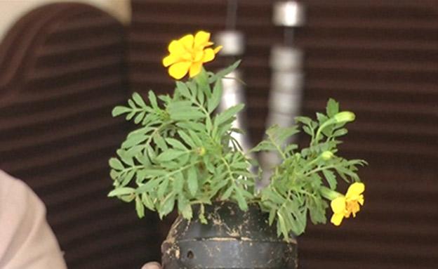 """""""פרחים בקנה"""" - גרסת עזה (צילום: רויטרס, חדשות)"""
