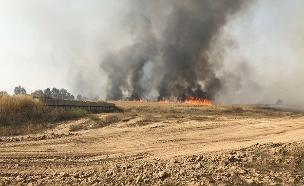 שריפה ביער בארי (ארכיון) (צילום: חדשות)