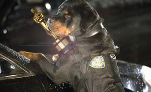 """והאוסקר הולך ל... (צילום: מתוך הסרט """"מילה של כלב"""", יחצ)"""