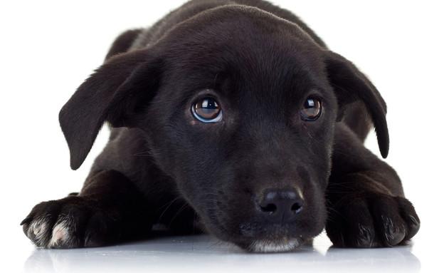 כלב שחור (צילום:  Viorel Sima, shutterstock)