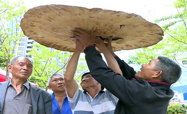 הידיעות הכי צבעוניות מרחבי הגלובוס (צילום: CCTV, חדשות)