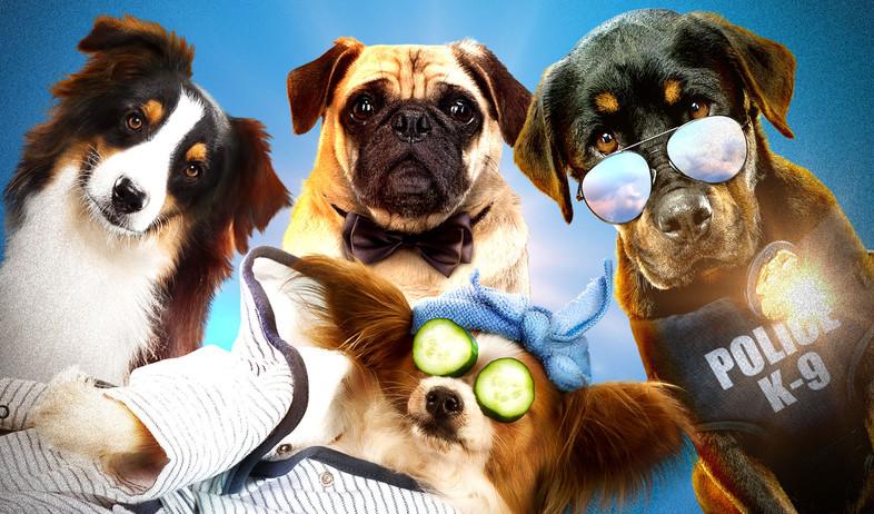 מילה של כלב (צילום: יחסי ציבור)