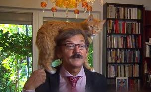 החתול שגנב את ההצגה - כך זה נראה (צילום: חדשות)