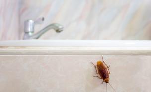 ג'וק ליד כיור (צילום: Poravute Siriphiroon, Shutterstock)
