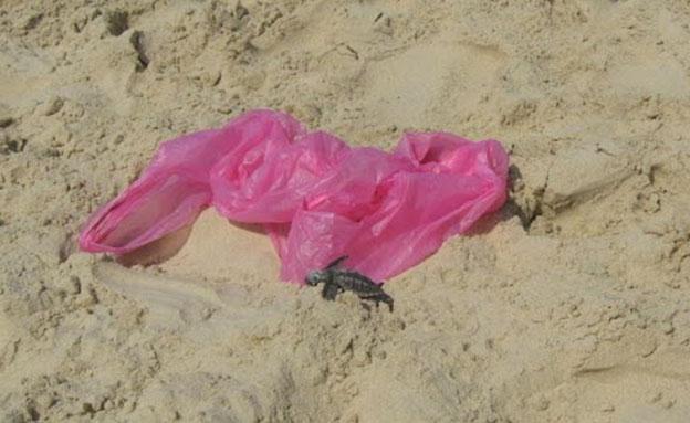 שקית שנשארה בחוף ומהווה סכנה לצבים (צילום: גליה פסטרנק, חדשות)