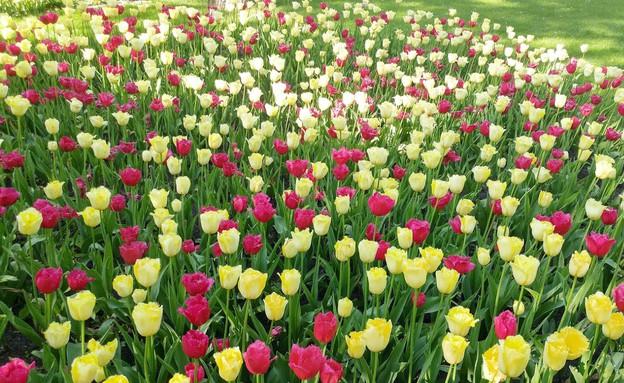צבעונים בפארק (צילום: מיכל מנור)
