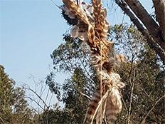 הבז שנמצא בנחל הבשור (צילום: גלעד גבאי, רשות הטבע והגנים )
