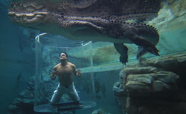בריכות מטורפות (צילום: crocosauruscove.com)