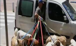 אנשים: על כלבים ועסקים (צילום: מתוך אנשים, שידורי קשת)