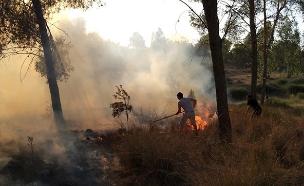 השרפה באשכול, היום (צילום: קיבוץ דורות, חדשות)