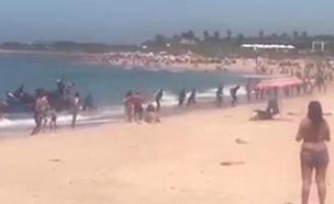צפו במרדף עם השוטרים בין הרוחצים בחוף בספרד (צילום: twitter / diariocadiz, חדשות)