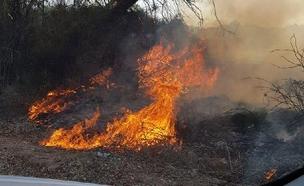 שרפה בקיבוץ ארז (צילום: דדי פולד, חדשות)