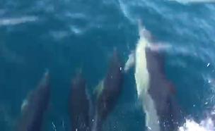 הביקור של להקת הדולפינים באשדוד (צילום: רן לוסטינגר, חברת החשמל, חדשות)