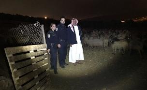בכבשים שבו לדיר של רועה  הצאן (צילום: דוברות המשטרה, חדשות)
