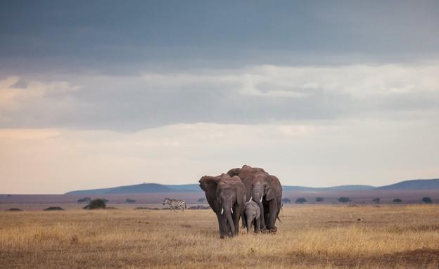 ספארי בטנזניה (צילום: דן ליאור)